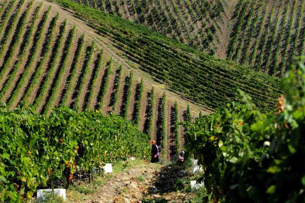 Turkish Vineyards Vinkara wine
